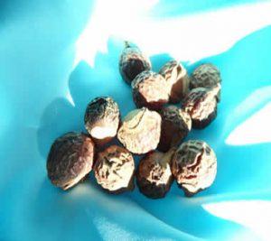 Organic soapnuts from the Soap Tree