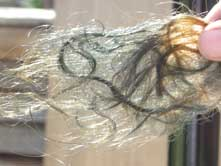 Light brown henna hair on day 2