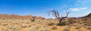 indigo desert