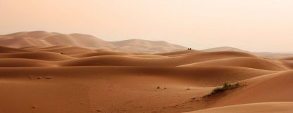 henna indigo cassia come from desert earth, photo of desert