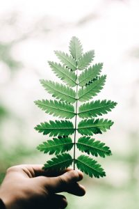 natural hair dye from plants, picture of hand holding leaf