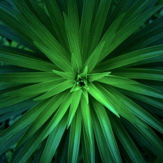 Plant Based Hair Dye