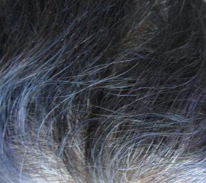 Purple hair fading in white hair