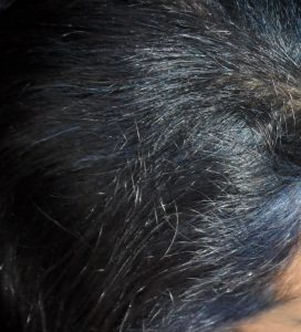 Faded Indigo Blue hair in Grey Hair