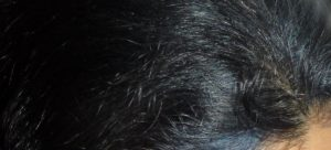 Indigo Blue Fade in Grey Hair