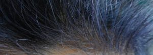 Indigo Purple Hair Colour in White Hair Colour